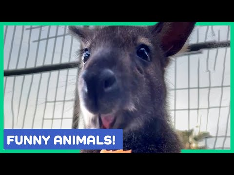 THE BEST ANIMAL VIDEOS OF THE WEEK! Funny Animals