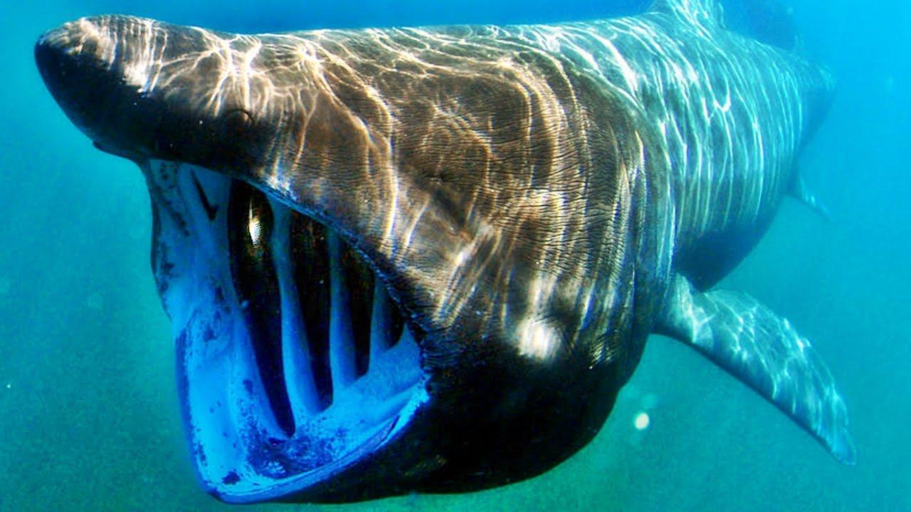 Dünyanın En Büyük Ağızlı 10 Hayvanı Youtube