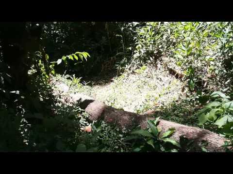 P1069643   Primaten Kakamega Forest NR