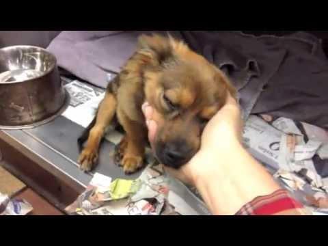 Tragic paralyzed puppy