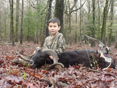 8 yr old Bow hunting Corsican Ram in Texas see ARROW IMPACT on this exotic sheep