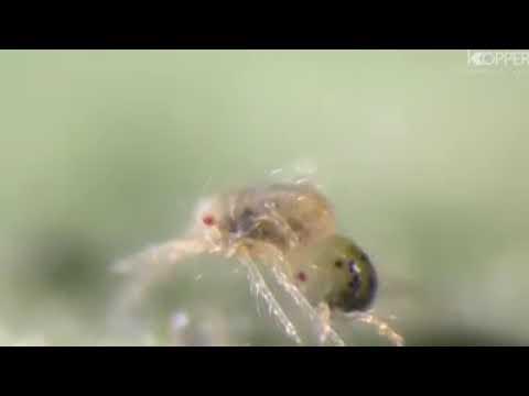 Download Ciclo de vida de la araña roja