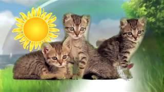 Little kittens play and have fun. Cartoon for children. Маленькие котята МУЛЬТФИЛЬМ