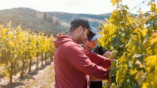 Ludor Wines - Summer 2019