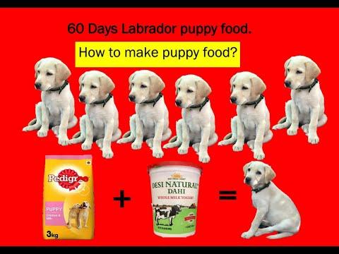 60 Days Labrador Puppy Food