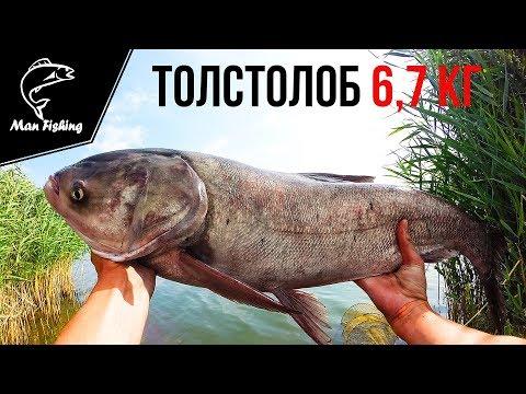 ловля толстолоба 2017 видео