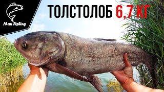 Ловля толстолоба на технопланктон (ТОЛСТОЛОБ 6,7 кг).Рыбалка.Fishing