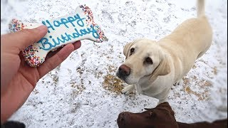 Chief's 3rd Birthday!!