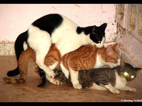 секс знакомства Кошки
