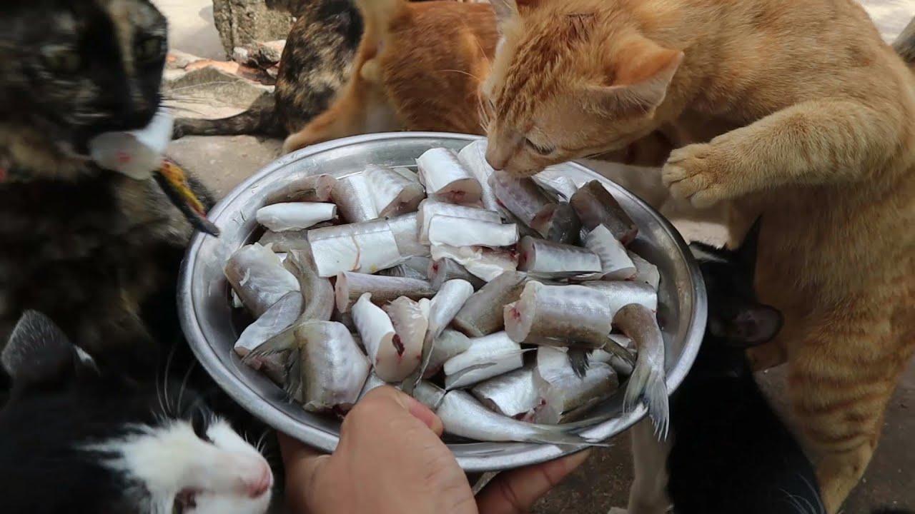 Feeding Cats - Raw fish - Cats eating Fish - Kitten eating Fish | The Gohan Dog And Cats