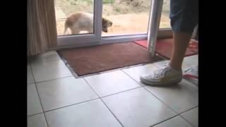 собаки тоже вытирают ноги
