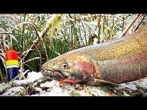 Winter STEELHEAD Catch & Cook (In The Woods!)
