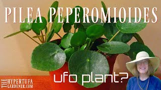Pilea peperomioides - Finally Got One! Now I Have 5!! 😁