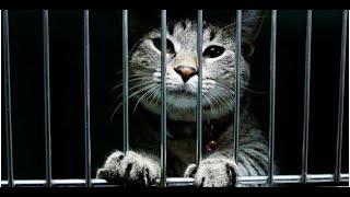 Остановите этих котов Подборка смешного видео с котами для хорошего настроения