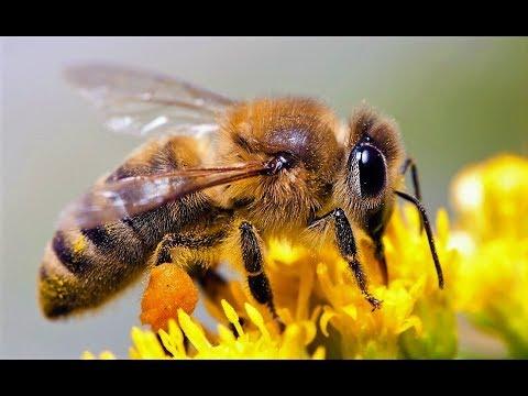 Harvard Study - GMO Crops & Honeybee Death