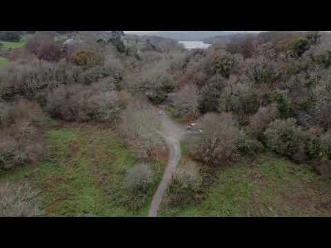 Peaceful Woods in 4K
