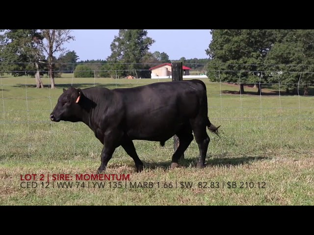 Edgewood Angus Lot 2