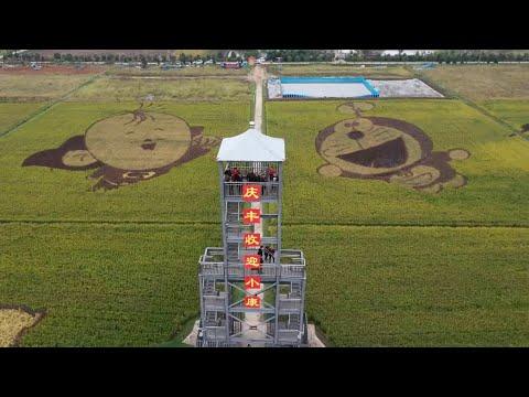 Crop Art In China's Rice Paddies Draws Tourists