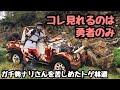 [モトブログ]トゲ林道 ガチ勢苦戦 伊豆 KLX125 XR230[motovlog]ツーリング kawasaki HONDA オフロード 刺さる