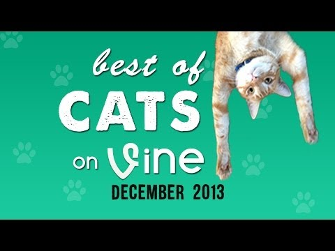 Best of Cat VINES!