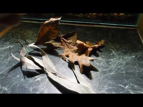 Почему важно добавлять листья в аквариум?