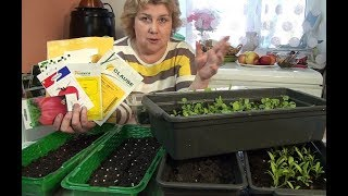 У меня Будет Огород потому что я  Купила Профессиональные семена