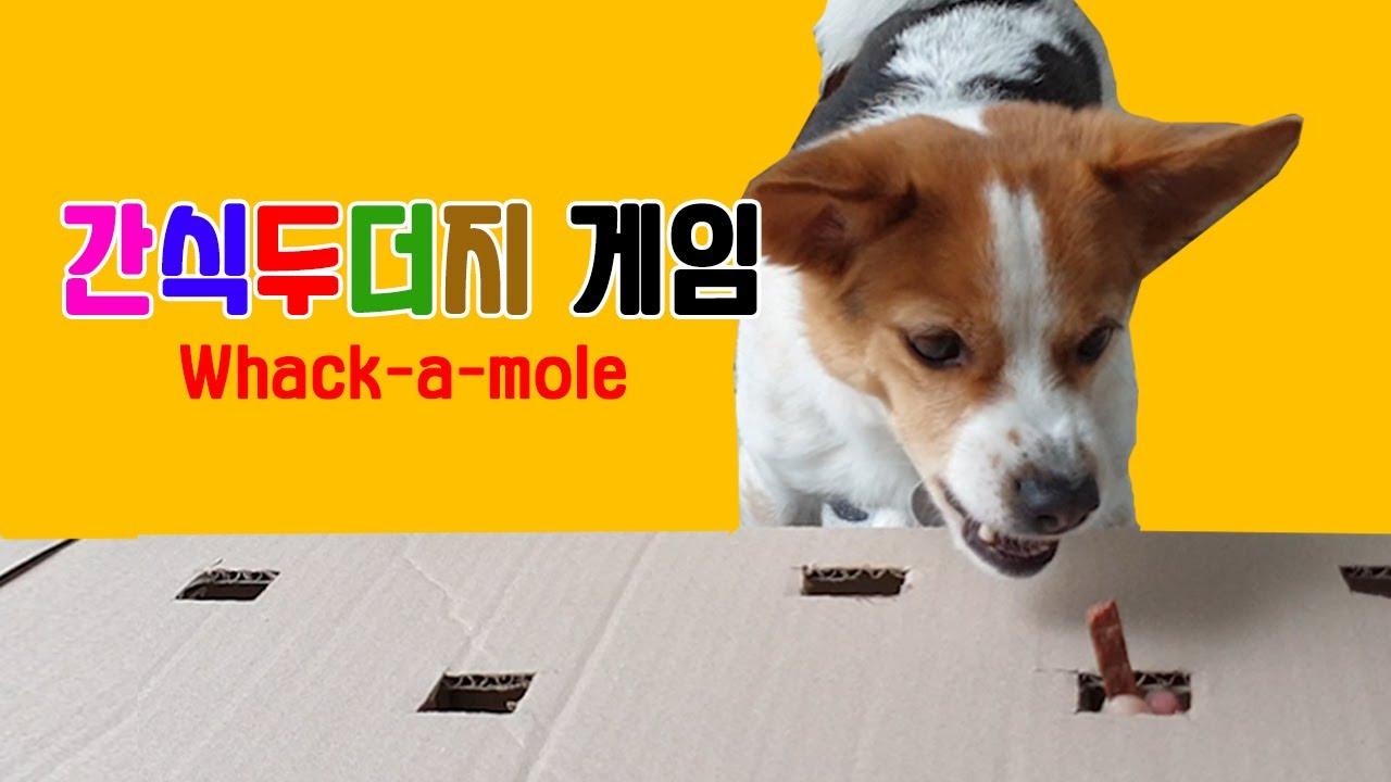 강아지 간식 두더지게임 챌린지 whack-a-mole dog challenge