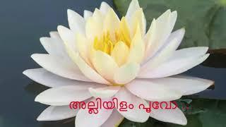 അല്ലിയിളം പൂവോ ഇല്ലിമുളം തേനോ..!! (Mini Anand)