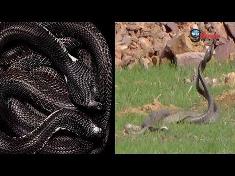देखें इच्छाधारी नाग-नागिन को! | Wishful Serpent Snake