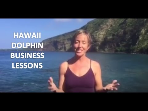 Hawaii Dolphin Business Lessons