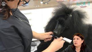 [잇츠그룸/ITZGROOM] 강아지 머리끈 묶기 랩핑 …
