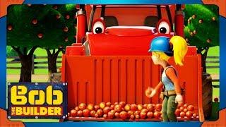 Bob el Constructor episodios completos | Manzanas en todas partes ⭐ NUEVA Temporada 20 de Compilación ⭐ dibujos animados para los Niños