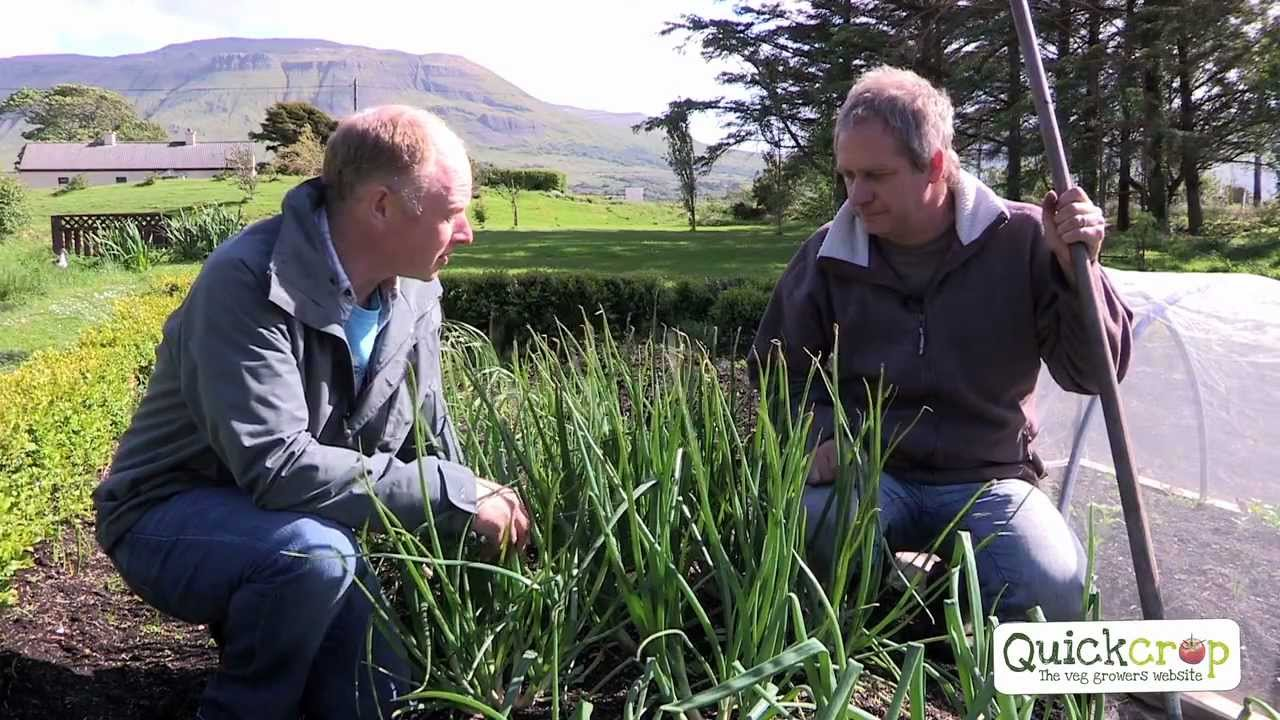 Grow Your Own Shallots With Quickcrop