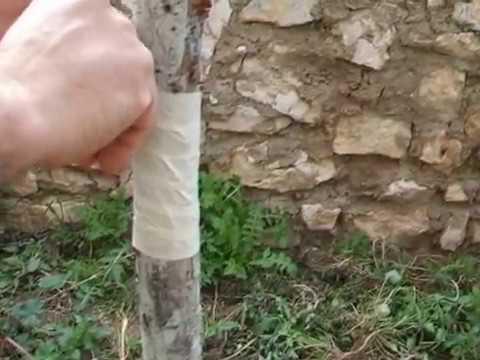 como eleminar y evitar hormigas y pulgon en arboles frutales - youtube