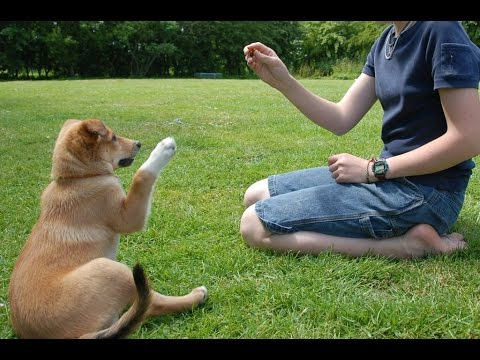 Secrets To Dog Training: How To Stop Your Dog's Behaviour Problems!