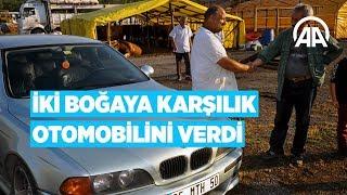 Anadolu Ajansı - İki boğaya karşılık otomobilini verdi