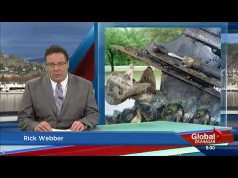 Global Okanagan - March 31, 2015 - Fight against mussels