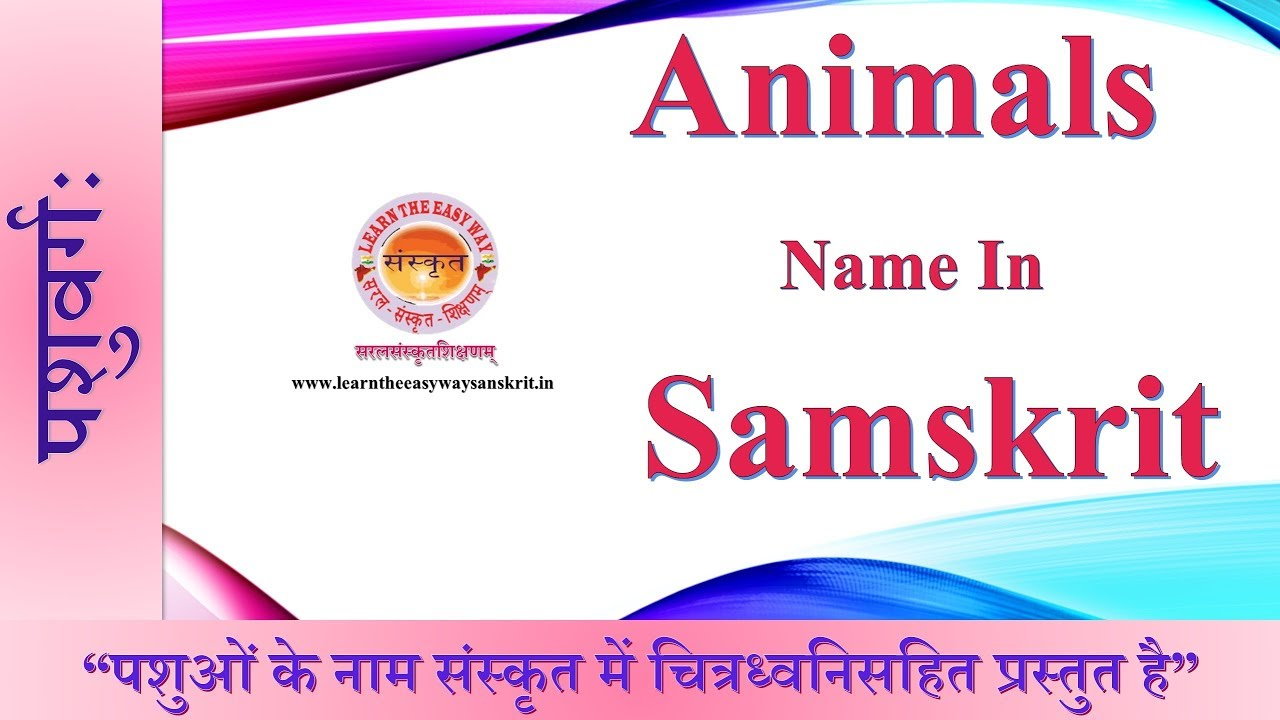 Learn The Easy Way Sanskrit | Animals Name in Sanskrit | Pictures