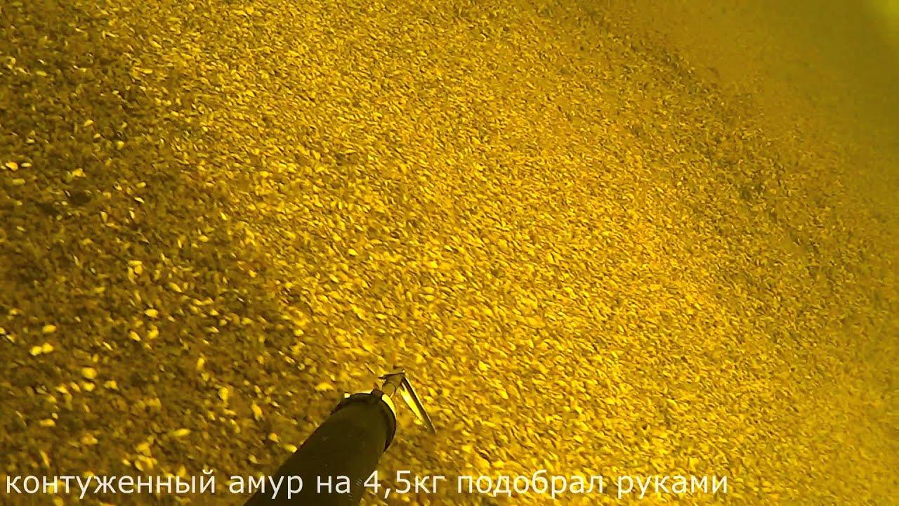 Подводная охота Волга толстолобик на 15кг глубина 17 метров