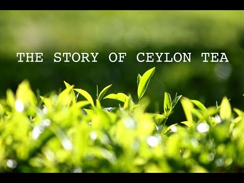 THE STORY OF CEYLON TEA - (MINERVA the documentary team production)