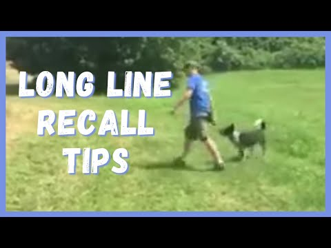 Dog Training   Long line recall tips   Solid K9 Training Dog Training