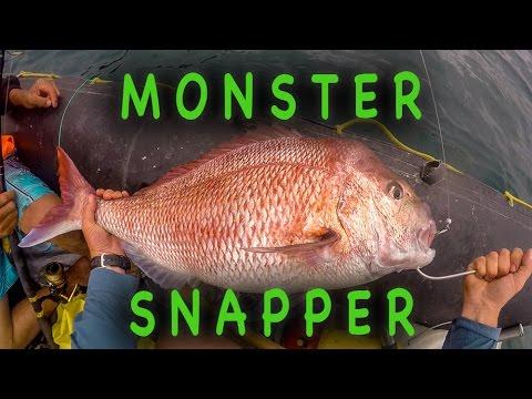 25lb+ Snapper Action, Fishing Far North NZ