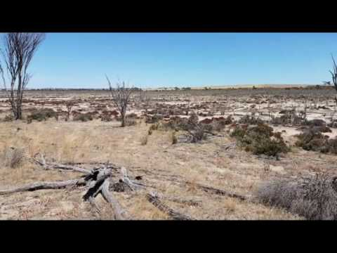 The Death and Destruction of Southern Australia - Land Clearing, Salinity and Monsanto
