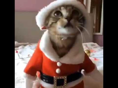 CAT (BILLI)