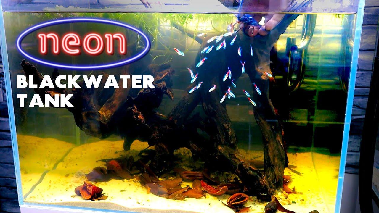 Aquascape Tutorial: Neon Tetra Blackwater Aquarium (How To: Full Step By Step Guide)