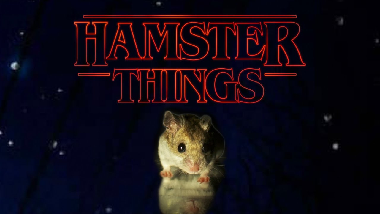 Hamster Things – 'Stranger Things' with Hamsters