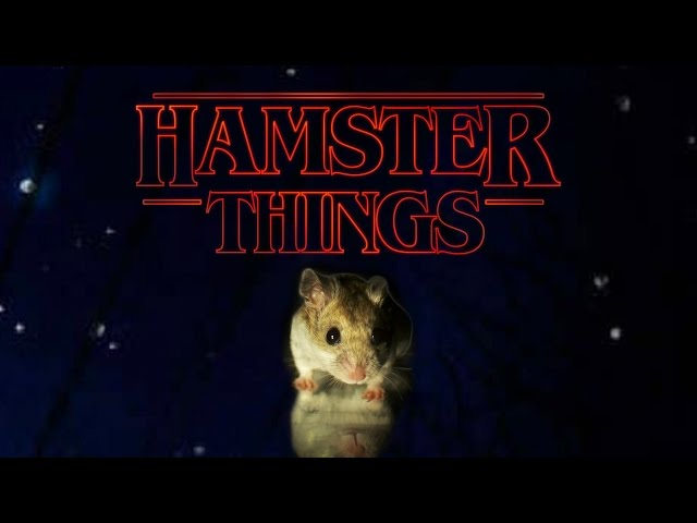 Hamster Things - 'Stranger Things' with Hamsters