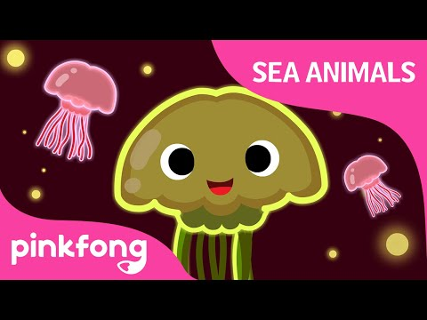 Wibble Wobble, Jellyfish | Sea Animal Songs | Animal Songs | Pinkfong Songs For Children