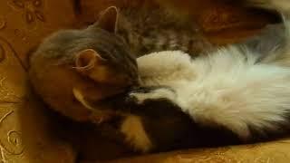 #Кошачья нежность.Смешное про кошек. Приколы про кошек и котов.