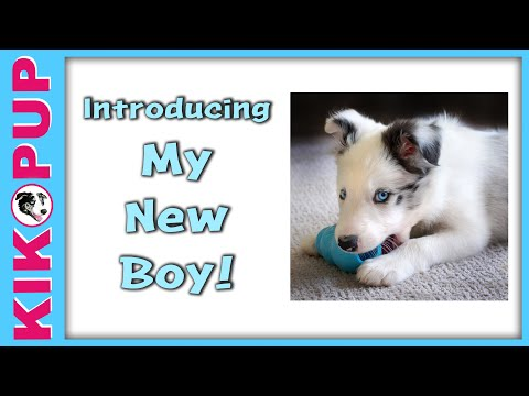 Introducing my new boy!  - Puppy tutorials coming soon!